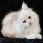 UKOGIGr Pr Isadoryou Pink Panther