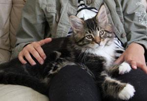 IGP & Supreme Kitten Isadoryou Mr Bojangles